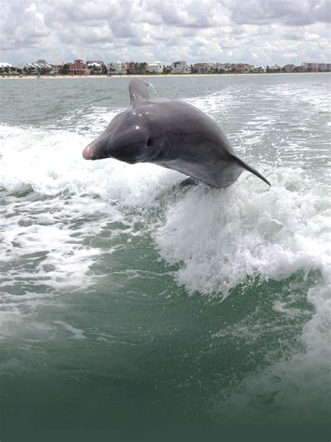 boat tours from naples florida fort myers beach dolphin sunset boat tours cruises near