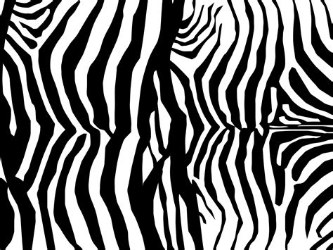 free zebra pattern background zebra skin print pattern free stock photo public domain