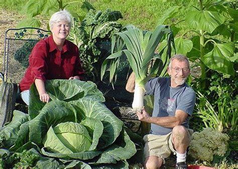 Giant Vegetables (26 pics)   Izismile.com