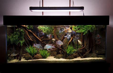 aquascape and new fish in the cichlid tank diy 190g cichlid quot biotope quot tank aquariums fish and