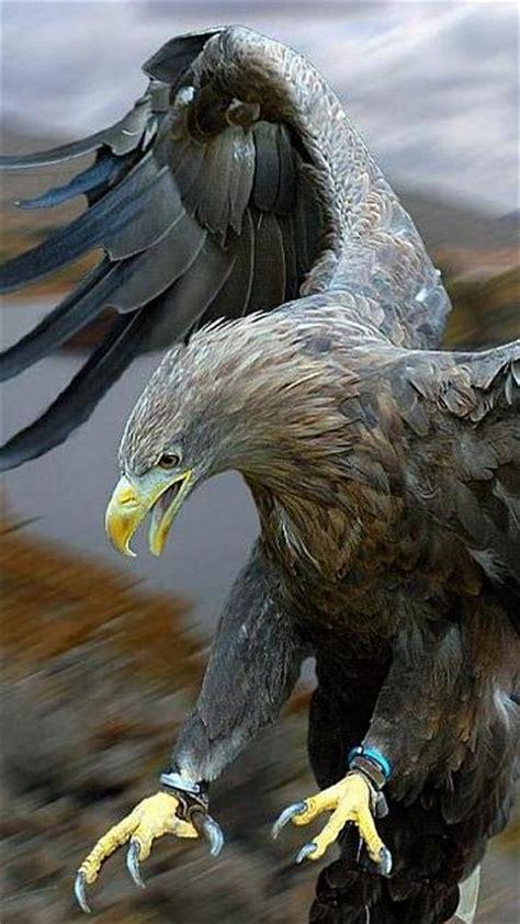 eagle pro mobile phone wallpapers  phones hd wallpaper