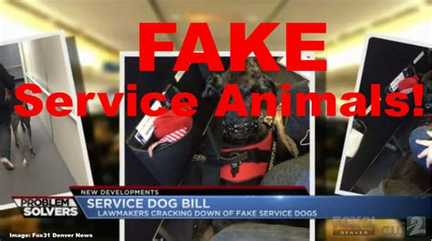 Best Email Lookup Service Colorado The State To Make Service Animals A Crime Legislation Introduced