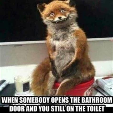 Show Me The Carfax Meme 28 Images The Best Fox Memes Memedroid