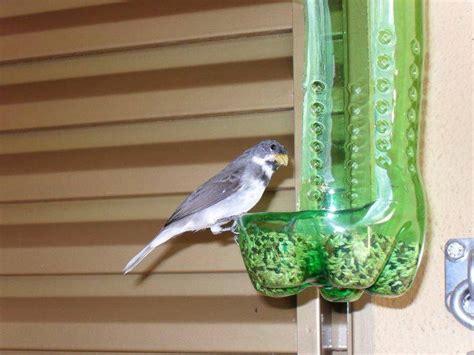2 Liter Bird Feeder 2 liter pop bottle bird feeder my yard