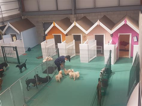 luxury pet hotel creedons dog care creedons dog care