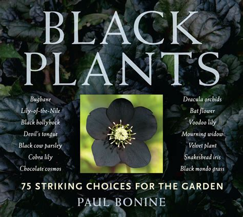 black flower garden black plants 75 striking choices for the garden from