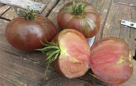 recept uit eigen keuken rtl good passie voor tomaten with tomaten verbouwen
