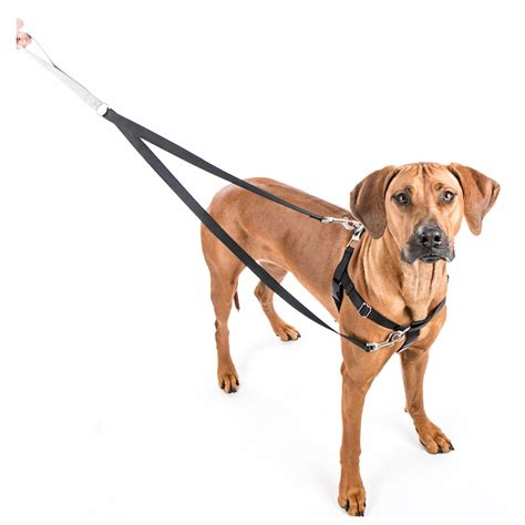 no pull collar freedom no pull harness no chew harness elsavadorla