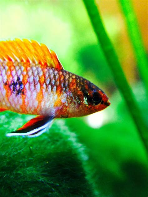 best nano fish tank 180 best images about nano fish tanks on
