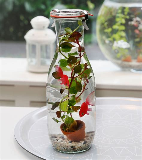 buy pond plants  glass bottle  aquatic