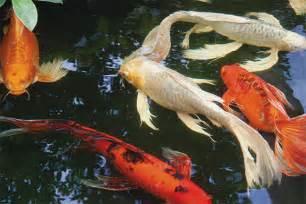 Japanese Aquascape Fish