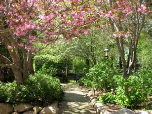 Pink Blossoms in the Cape Cod Bed and Breakfast Garden 1 800 Flowers Reviews