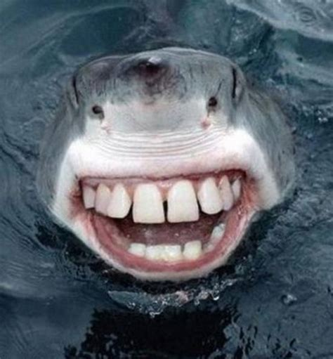 shark stubbed its toe on a coral reef funny