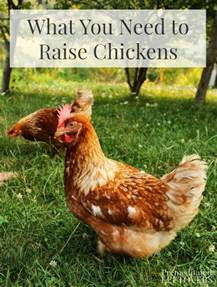 Backyard Chickens What You Need What You Need To Raise Chickens