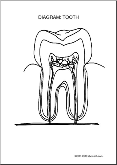 diagram of a tooth to label 10 best images of parts of the tooth worksheet tooth