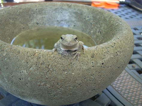 Make Your Own Concrete Planters by Easy To Make Concrete Bowls And Planters