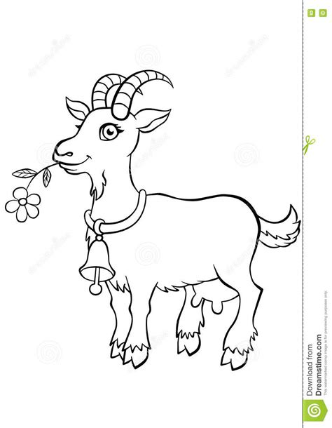 cute goat coloring pages coloring pages animals little cute goat stock vector