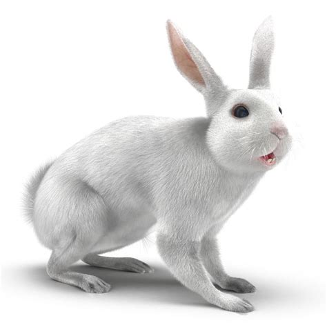 12 Md Rabbit Bery White 3d white rabbit rigged