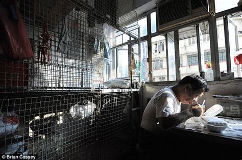 hong kong s cage homes tens of thousands living in 6ft by