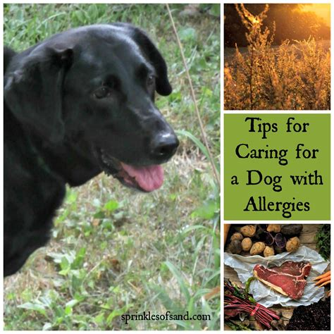 dogs for allergies in the house archives page 2 of 3 sprinkles of sand