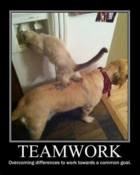 Teamwork Meme - monday teamwork quotes quotesgram