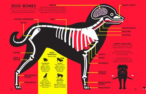 libro infographics animal kingdom the kids are all bright infographics for all ages simon rogers