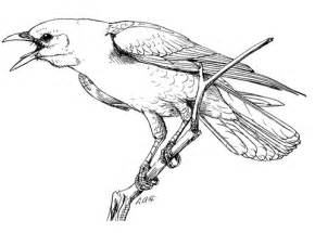 realistic perched american crow coloring page free