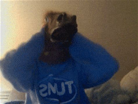funny horse head mask funnymadworld head horse gif find share on giphy