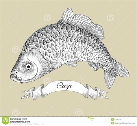 drawing of carp with vignette stock vector image 53257328
