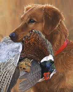 how to a golden retriever to hunt common pheasant history