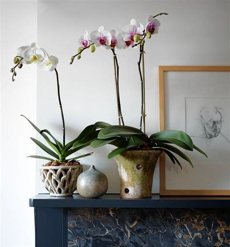 Orchids Pots Planters 25 best ideas about orchid pot on orchids garden growing orchids and orchids