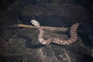 Garden Snake Ontario Flickr Photo