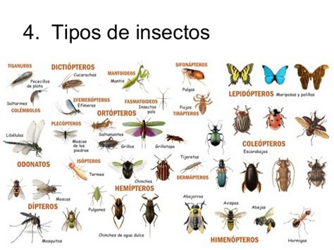Insectos En Ingles Picture And Images