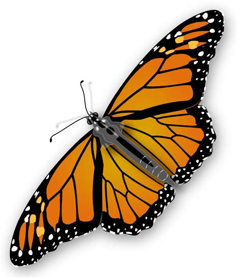 monarch butterfly template printable onlinelabels clip monarch butterfly