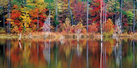 fall foliage  heres   leaves    peak