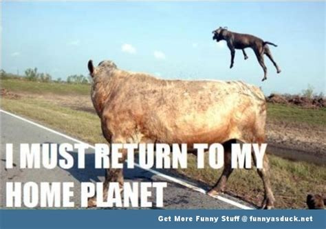 Funny Cow Memes - funny cow meme www pixshark com images galleries with