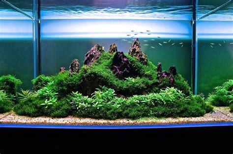 mountain aquascape die besten 25 trigon 190 ideen auf pinterest juwel trigon aquascaping und aquarium