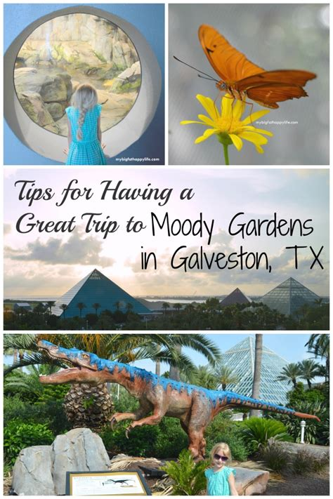 Moody Gardens Discount Tickets by Tips For A Great Trip To Moody Gardens Coupon Code Expired Big Happy