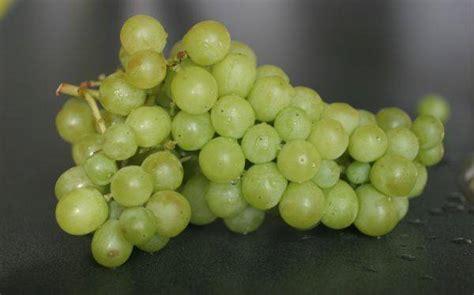 imagenes de uvas de año nuevo 191 por qu 233 se comen 12 uvas por a 241 o nuevo el irreverente