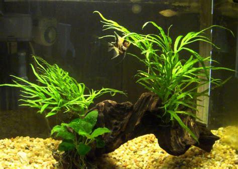 Hiasan Akuarium Tanaman Akuarium Plastik aneka tanaman hias air tawar untuk mempercantik aquarium tanaman hias tanaman hias