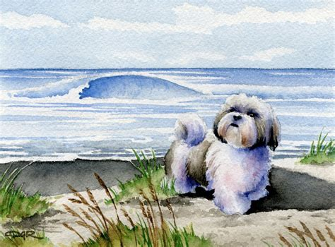 shih tzu painting shih tzu print watercolor signed by artist dj rogers