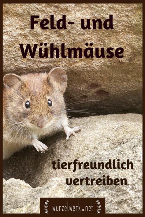 was tun gegen mäuse im garten mittel gegen wuhlmause im garten 28 images was mache