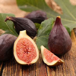 violette de bordeaux fig  park seed