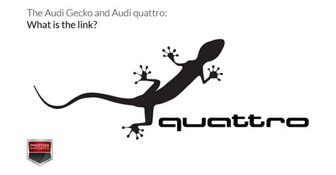 Audi Quattro Meaning by Audi Gecko Logo And Audi Quattro What Is The Link