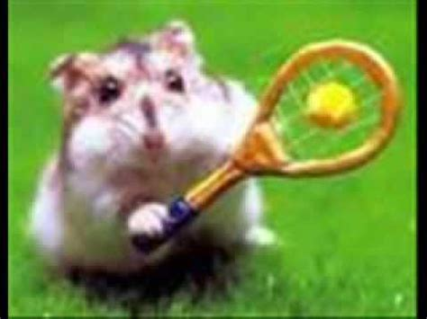 youtube music hamster dance hamster dance funny mustwatch youtube