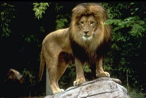 imagenes animales grandes los animales mas grandes
