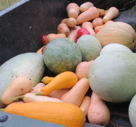 weight loss vegetables list a garden vegetables list for weight loss countryside network