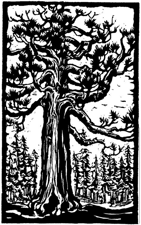 coloring page of redwood tree redwood trees colouring pages page 2