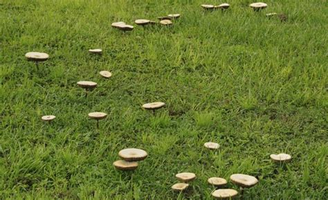 Pilze Im Rasen Kalk by 56 Best Rasen Images On