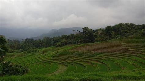 Membangun Kemandirian Desa desa membangun indonesia harus jadi paradigma tribunnews